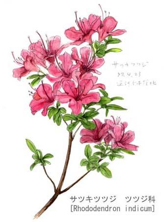ツツジ 1 : 漢字練習 : 漢字